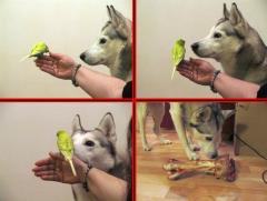 xtra_dog